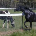 horse_farm_fence_1