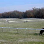 horse_farm_fence_2