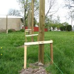 installing fence posts in yard 1
