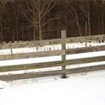 wood_rail_fence_1